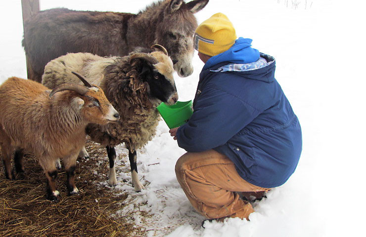 A Red Bird in the Snow and feeding my four legged friends www.thebearfootbaker.com